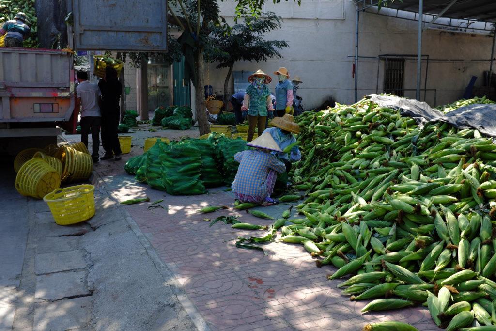 Maisernte auf Hainan