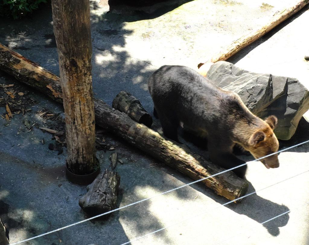 Bär leider nur im Zoo