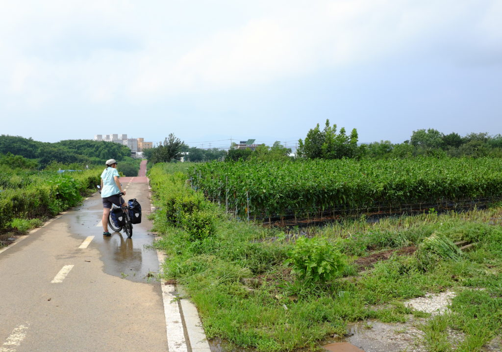Schnurgerade Fahrradwege