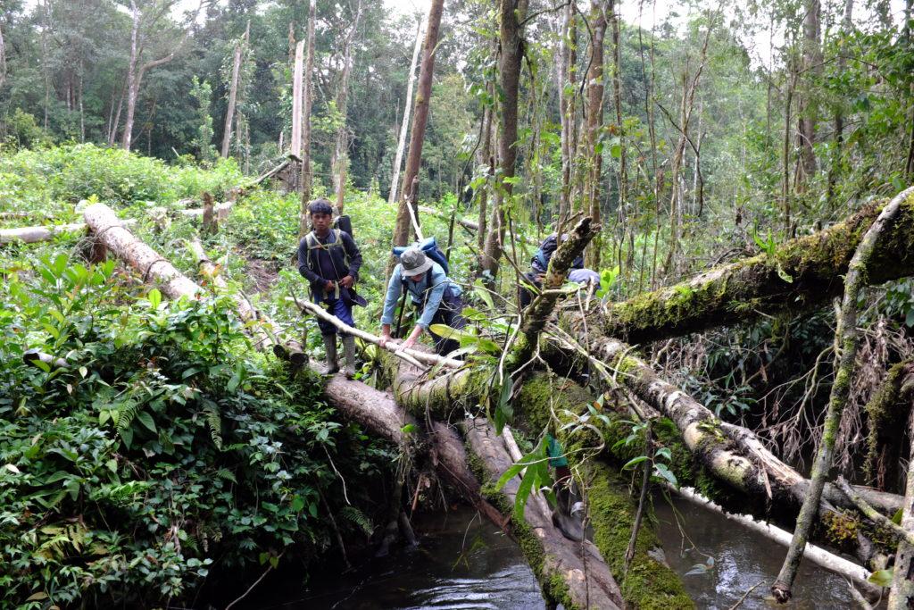 Bergwelt Sumatras